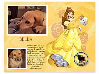 Labrador Retriever Dog for adoption in Ypsilanti, Michigan - Bella