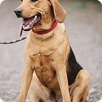 Adopt A Pet :: Savannah - Portland, OR