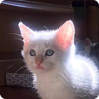 Adopt A Pet :: Pixie and Gandolf - Southington, CT
