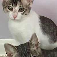 Adopt A Pet :: Ginnie - Jacksonville, TX