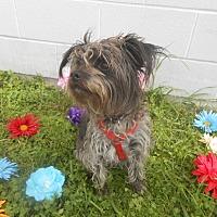 Adopt A Pet :: Dierks - Lockhart, TX