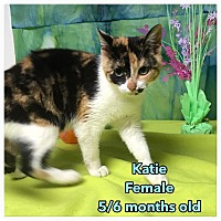 Adopt A Pet :: Katie - Simpsonville, SC