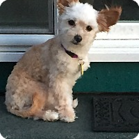 Adopt A Pet :: ASHLEY-ADOPTED!! - Lynnwood, WA