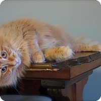 Adopt A Pet :: Lily - Lenhartsville, PA