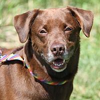 Adopt A Pet :: Zeke - Marietta, OH