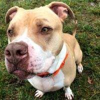 Adopt A Pet :: Ralph Jackson - Kalamazoo, MI