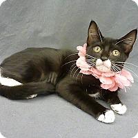 Adopt A Pet :: Cocoa - San Leon, TX