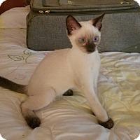 Adopt A Pet :: Smokey - New Port Richey, FL