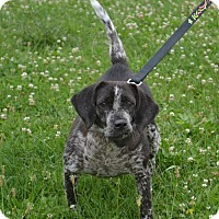 Adopt A Pet :: Zoie - Akron, OH