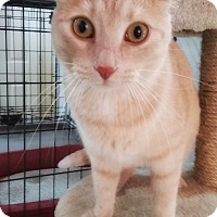 Adopt A Pet :: Sophie - Jackson, MO