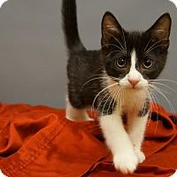 Adopt A Pet :: Oreo - Columbia, IL