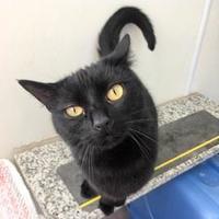 Adopt A Pet :: Sharon - Janesville, WI