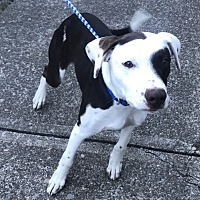 Adopt A Pet :: Sampson - Newport, OR