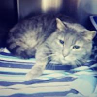 Adopt A Pet :: Grappa - Trevose, PA
