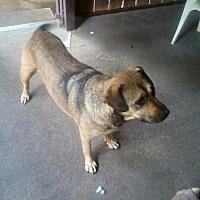 Adopt A Pet :: Lucy - Clarksville, TN
