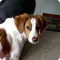 Adopt A Pet :: Nhayla - Alliance, NE
