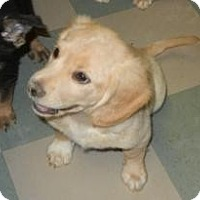 Adopt A Pet :: Zack ADOPTED!! - Antioch, IL