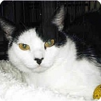 Adopt A Pet :: Ruby - Medway, MA