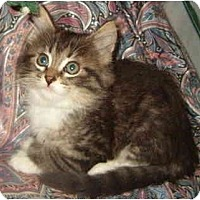 Adopt A Pet :: Keagan - Keizer, OR