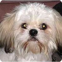 Adopt A Pet :: Dempsey - Mays Landing, NJ