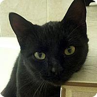 Adopt A Pet :: Eliza Doolittle - Denton, TX