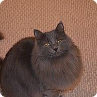 Adopt A Pet :: Foxxy Cleopatra - Milford, MI