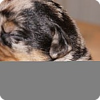 Adopt A Pet :: Maggie aka Stella 9 - Conway, AR