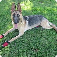 Adopt A Pet :: Elke - Phoenix, AZ