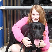 Adopt A Pet :: Marley - Lewisville, IN