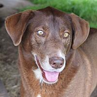 Adopt A Pet :: Tess - Iola, TX