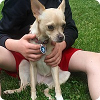 Adopt A Pet :: Dillon ~ meet me! - Glastonbury, CT