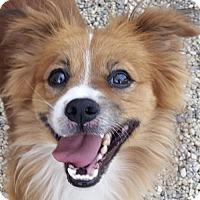 Adopt A Pet :: Wilson - Bloomington, IL