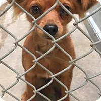 Adopt A Pet :: Pippa - Boulder, CO