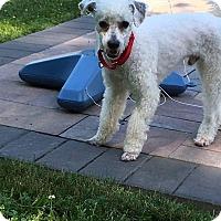 Adopt A Pet :: Louis - Freeport, NY