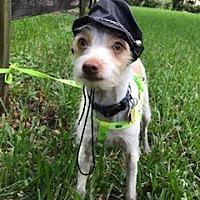 Adopt A Pet :: Mozart - Davie, FL