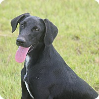 Adopt A Pet :: Scone **ADOPTED** - Hooksett, NH
