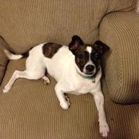 Adopt A Pet :: Didi - West Palm Beach, FL