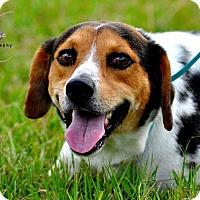 Adopt A Pet :: Liberty - Houston, TX