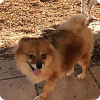 Adopt A Pet :: Chloe - Matthews, NC
