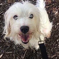 Adopt A Pet :: Powder - Oak Ridge, NJ