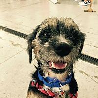 Adopt A Pet :: Lenny - Houston, TX