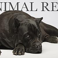 Adopt A Pet :: Martha-potimus - Los Angeles, CA