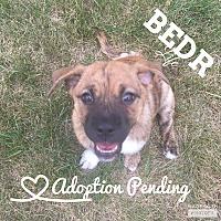 Adopt A Pet :: Pegasus - Regina, SK