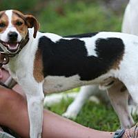 Adopt A Pet :: JJ - York, PA