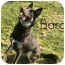Photo 1 - German Shepherd Dog Dog for adoption in San Clemente, California - BARON