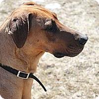 Adopt A Pet :: Grace - Woodstock, IL