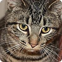Adopt A Pet :: Dunkin (LE) - Little Falls, NJ