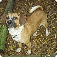 Adopt A Pet :: Leia - cedar grove, IN