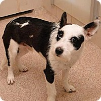 Adopt A Pet :: Buster - Albuquerque, NM