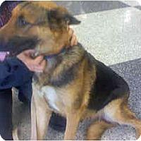 Adopt A Pet :: Angel - Scottsdale, AZ